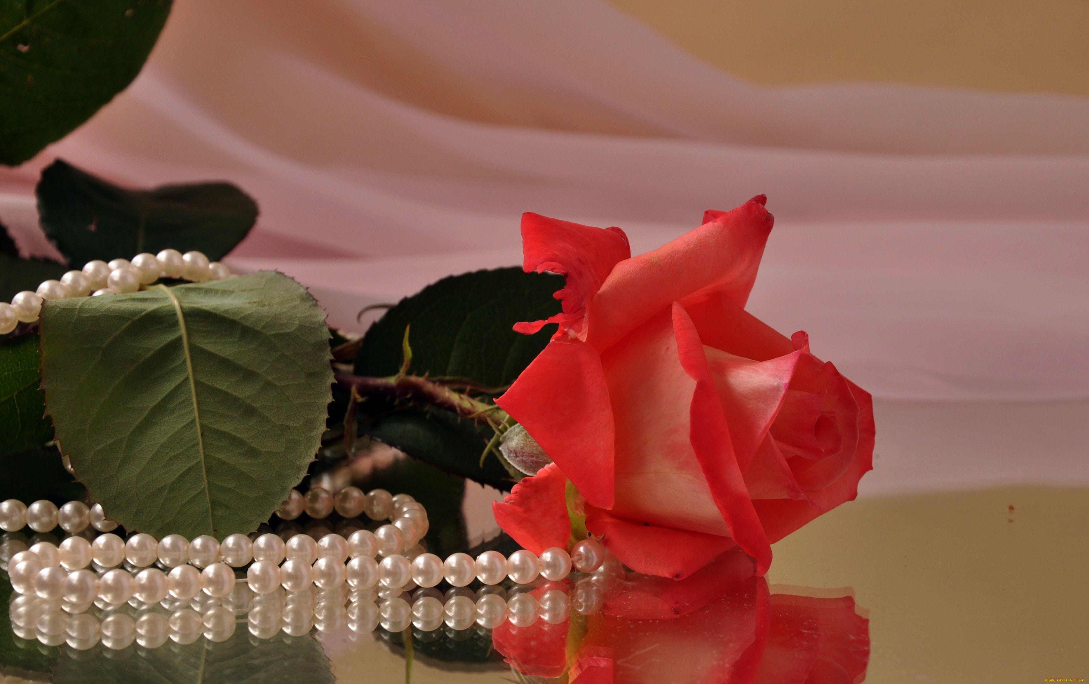 внешнего облика фото цветы и бусы поливаю свои цветочки